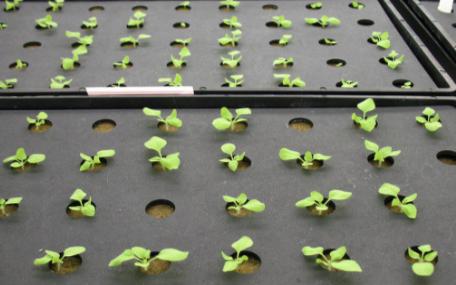 智能温室大棚控制系统可以实时远程监测大棚农作物