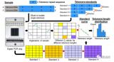 基于PCR技术的单端粒绝对长度快速分析法