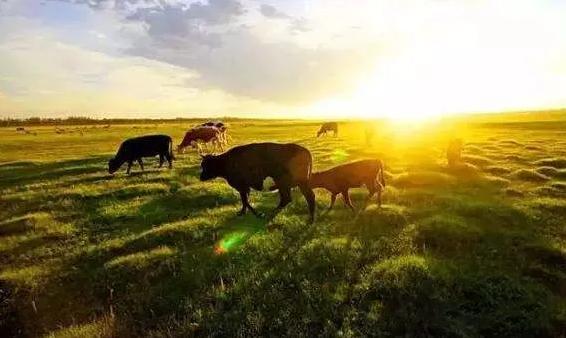 lora模块在牛联网和智慧农业中应用案列的分析