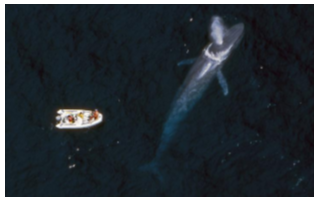 使用人工智能(AI)技术确定鲸鱼的位置