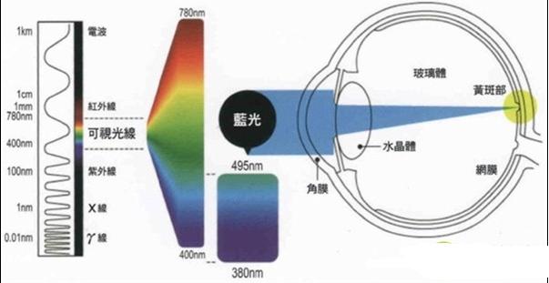 智能電視的 液晶 與 OLED 哪個更護眼?