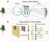 南京大学提出垂直结构的类脑视觉系统,为实现类脑机器视觉提供了思路
