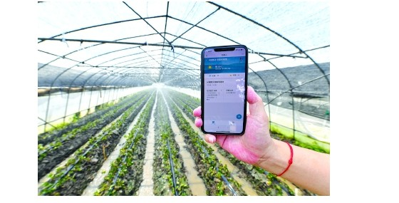 """在""""智慧農場""""里,機器人和遠程控制技術逐步取代傳統的人工田間勞作"""