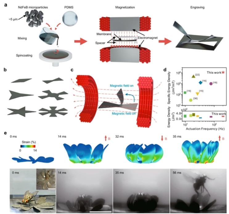 研究人員已成功研發出一種新型的磁驅動高速軟體機器人