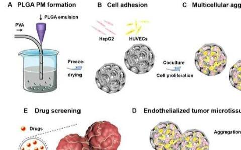 研究人员利用微流体化工技术制备高度贯通的多孔高分子微球用于药物筛选