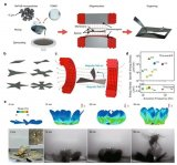 研究人員開發了一種新型的磁力驅動高速軟件機器人