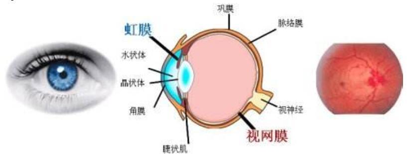 什么是虹膜识别技术_虹膜识别技术原理