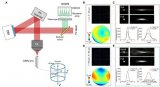 香港科技大学利用自适应光学技术,实现高分辨率神经突触成像