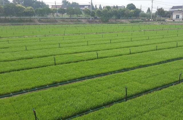 为什么要建设高标准农田,它需要用到哪些设备