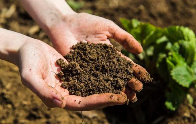 便携式土壤水势测定仪是什么,它的优势是什么