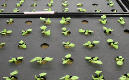 人工气候培养箱将逐渐在农业领域中得到广泛应用