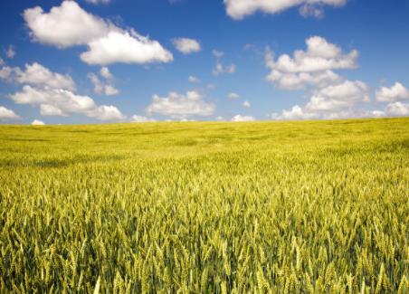 农业传感器将开启中国智慧农业大爆发的黄金时代