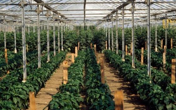 多点土壤水分监测系统在农业领域中的应用分析