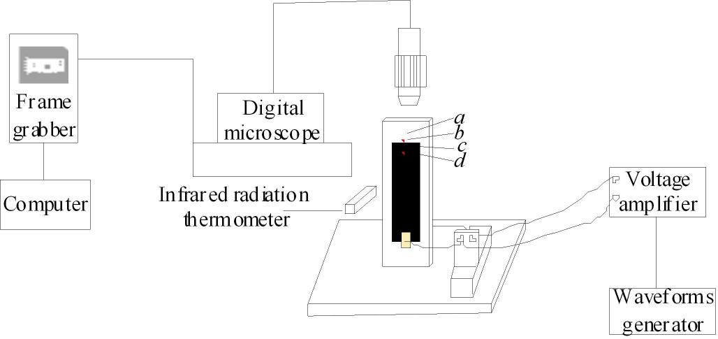 高压放大器在交变电场作用下骨表面温升的研究