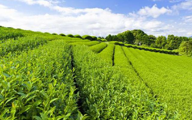 RFID固定资产管理系统之茶叶产品资产管理的应用
