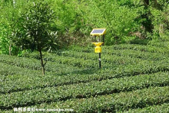 關于農用太陽能殺蟲燈在果園果樹種植中應用