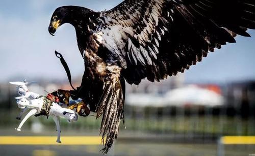 四川石油首个反无人机主动防御系统已正式投入使用