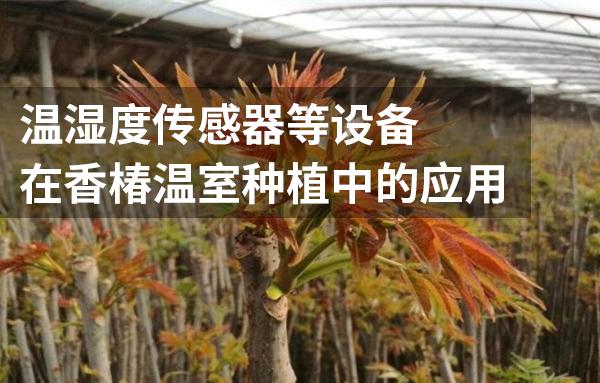 温湿度传感器在香椿温室种植中有着怎样的作用