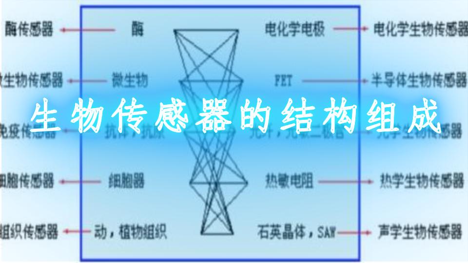 生物传感器的结构组成