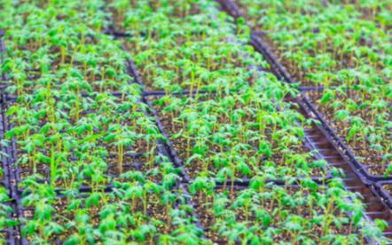 利用手持式氣象站科學指導可實現農業的可持續發展