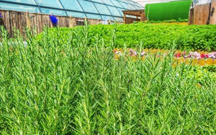 智慧农业系统大大提升了农业生产的数字化服务水平