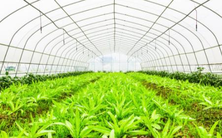 种子发芽室控制系统的特点,它的优势是什么