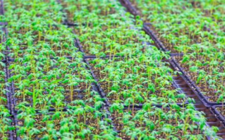 影响植物冠层图像分析仪准确性的因素是什么