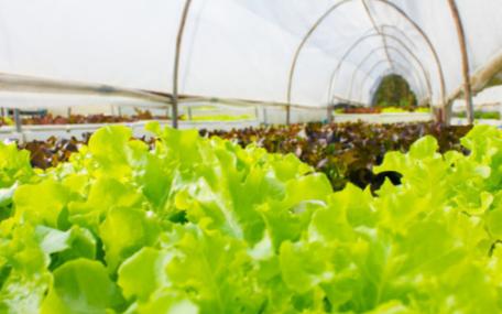 多点土壤水分监测系统的作用是什么,它都有哪些应用