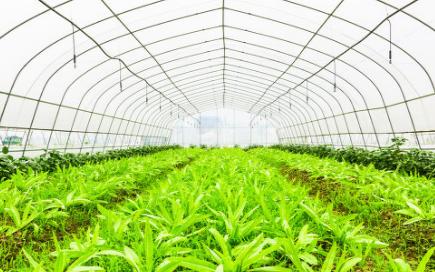 种子仪器设备在一定程度上提高了农作物的产量