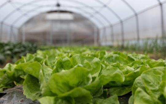 农业仪器该如何分类,农业检测仪器的作用是什么