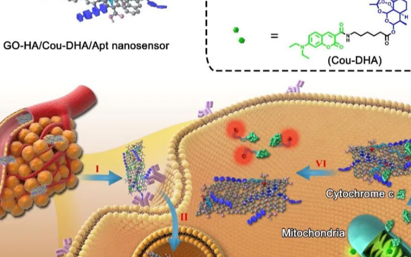 中國藥科大學成功構建納米傳感器,為未來中藥給藥提...