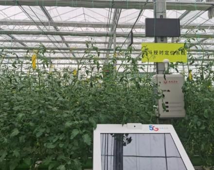 中国电信携手凤岐茶社共同打造5G新型农业试验场
