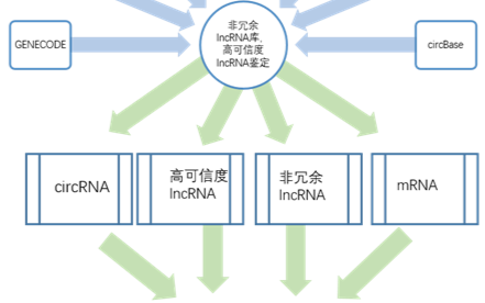 SBC ceRNA芯片簡介