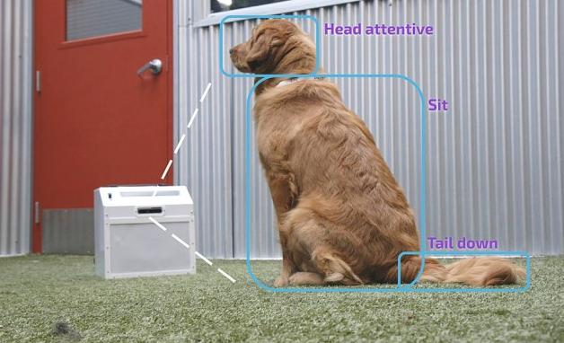 CompanionPro推用于训练狗的AI训练机