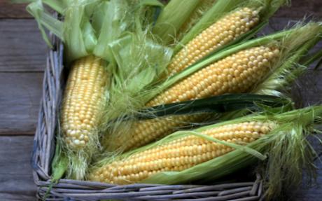什么是玉米考种系统,它可满足用户的多样化需求
