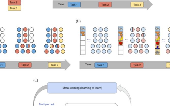 神經網絡中持續學習在穩步提高數據效率方面的潛力