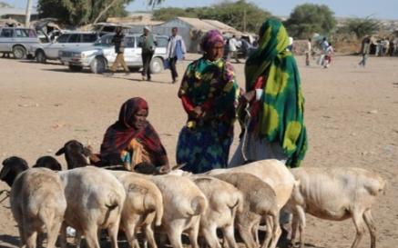智慧畜牧解决方案的概述以及解决目标