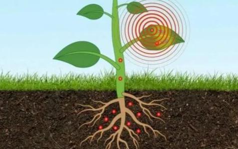 新型纳米传感器可实时监测地下砷含量