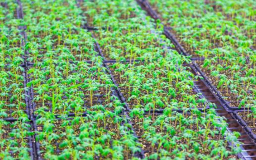 在现代农业生产中,为什么需要用到土壤墒情监测仪