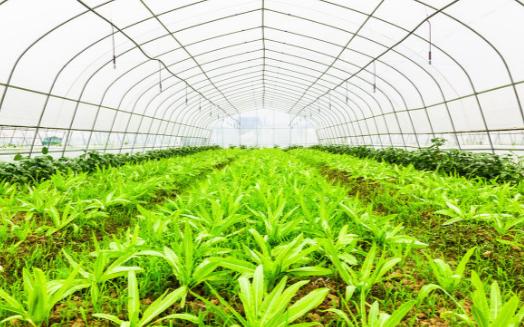 土壤墒情速测仪的用途以及土壤墒情速测仪的应用效果分析
