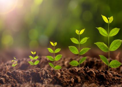 研究人員研發可監測土壤中砷含量的傳感器