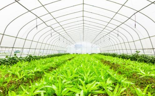 植物根系分析系统是什么,它的作用是什么