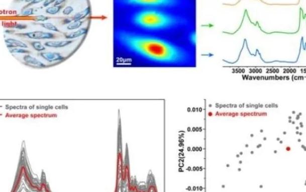 上海高研院等在单细胞红外成像技术的数据处理方法等研究中获进展