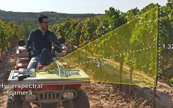 基于田间条件下的动态高光谱成像和机器学习对于葡萄品种分类的研究