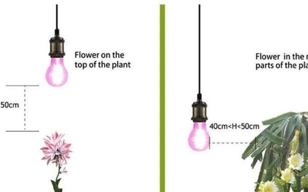 植物补光灯:补充光照帮助植物顺利过冬