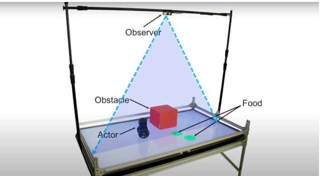 哥倫比亞科學家開發出了能夠預測同伴意圖的機器人