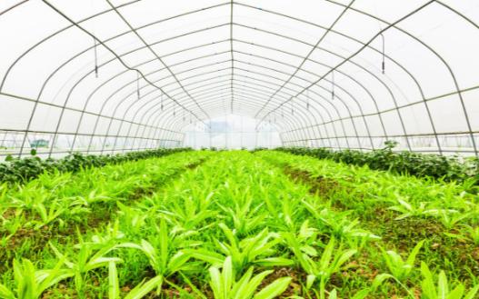太阳能频振式杀虫灯:助力实现作物的绿色防控效果