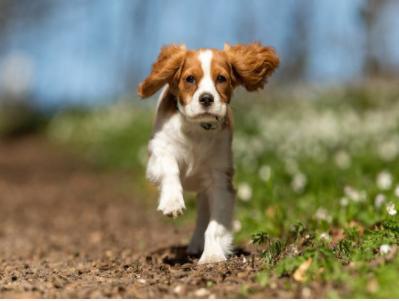 这个AI找狗工具识别准确率高达95%