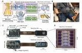 浙大生完成脑机接口15000小时人体植入和实验