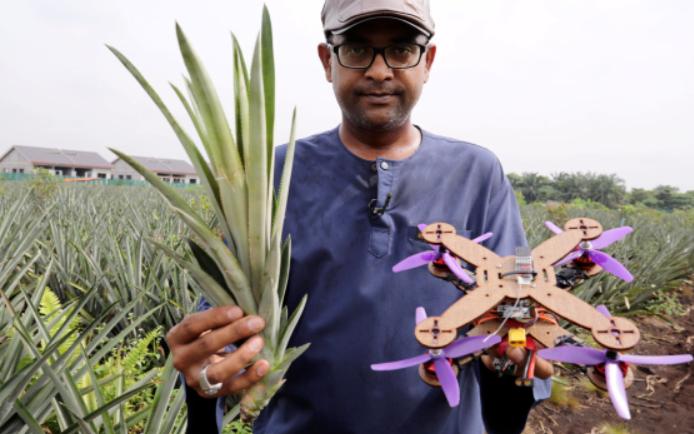 研究人员将菠萝叶中的纤维转变成足够坚固的材料 作...